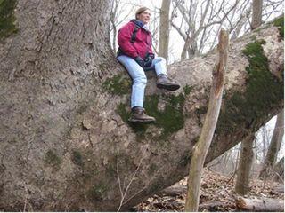 In tree