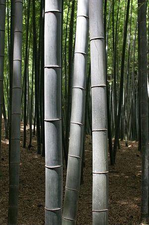 BambooKyoto
