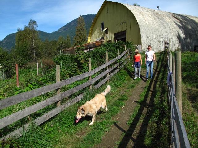 Good times barn