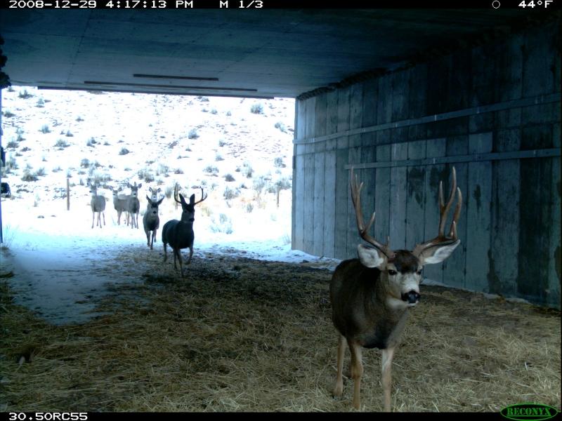 Deerunderpass
