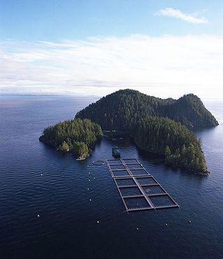 Salmon_farming-BC