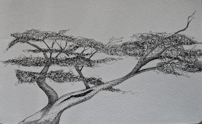 Treedrawingpat