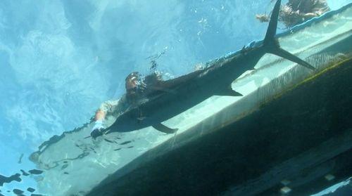 18_Marlin underwater