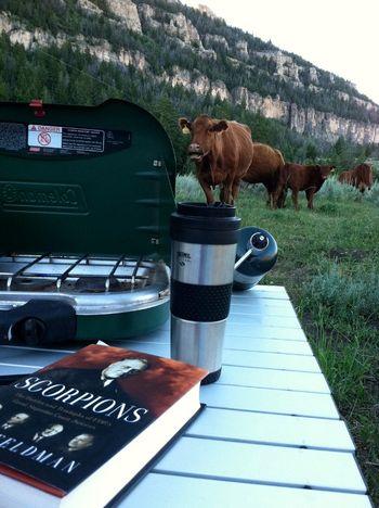 Katy - cows IMG_0333