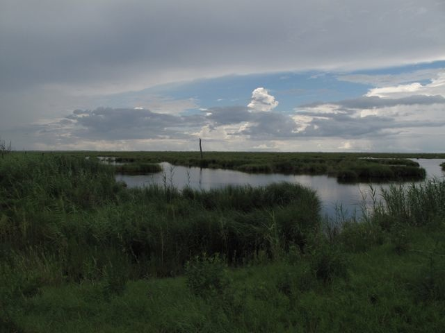 Wetlands_little