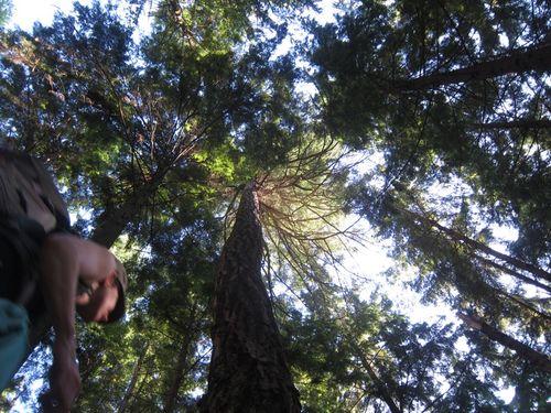 Kc - squamish trees IMG_5614