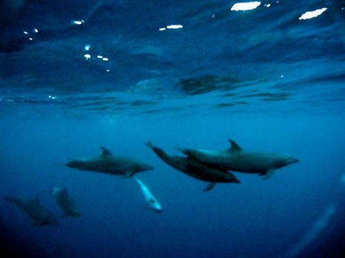 Liz_19_dolphin