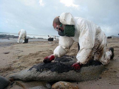 Prestige_oil_spill_Grueso