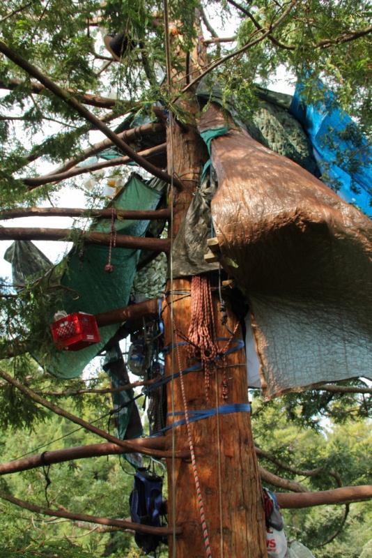 3_tree_house