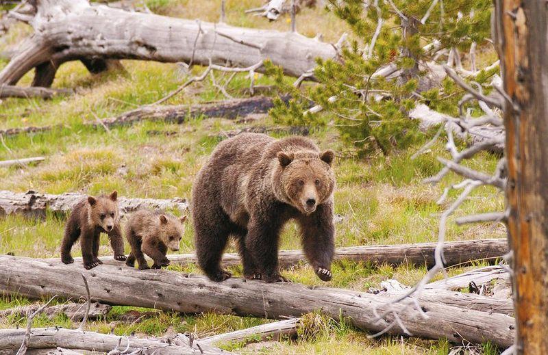 Mom_cubs